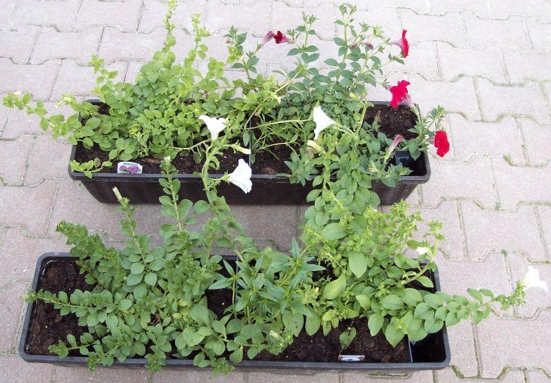 pflanzen in nanopics balkonk sten balkon bepflanzen. Black Bedroom Furniture Sets. Home Design Ideas