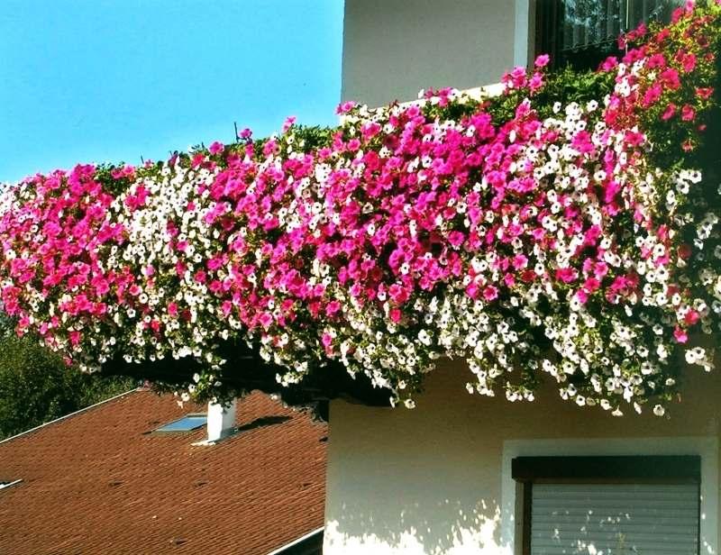 kruter pflanzen balkon wann kruter pflanzen balkon welche. Black Bedroom Furniture Sets. Home Design Ideas